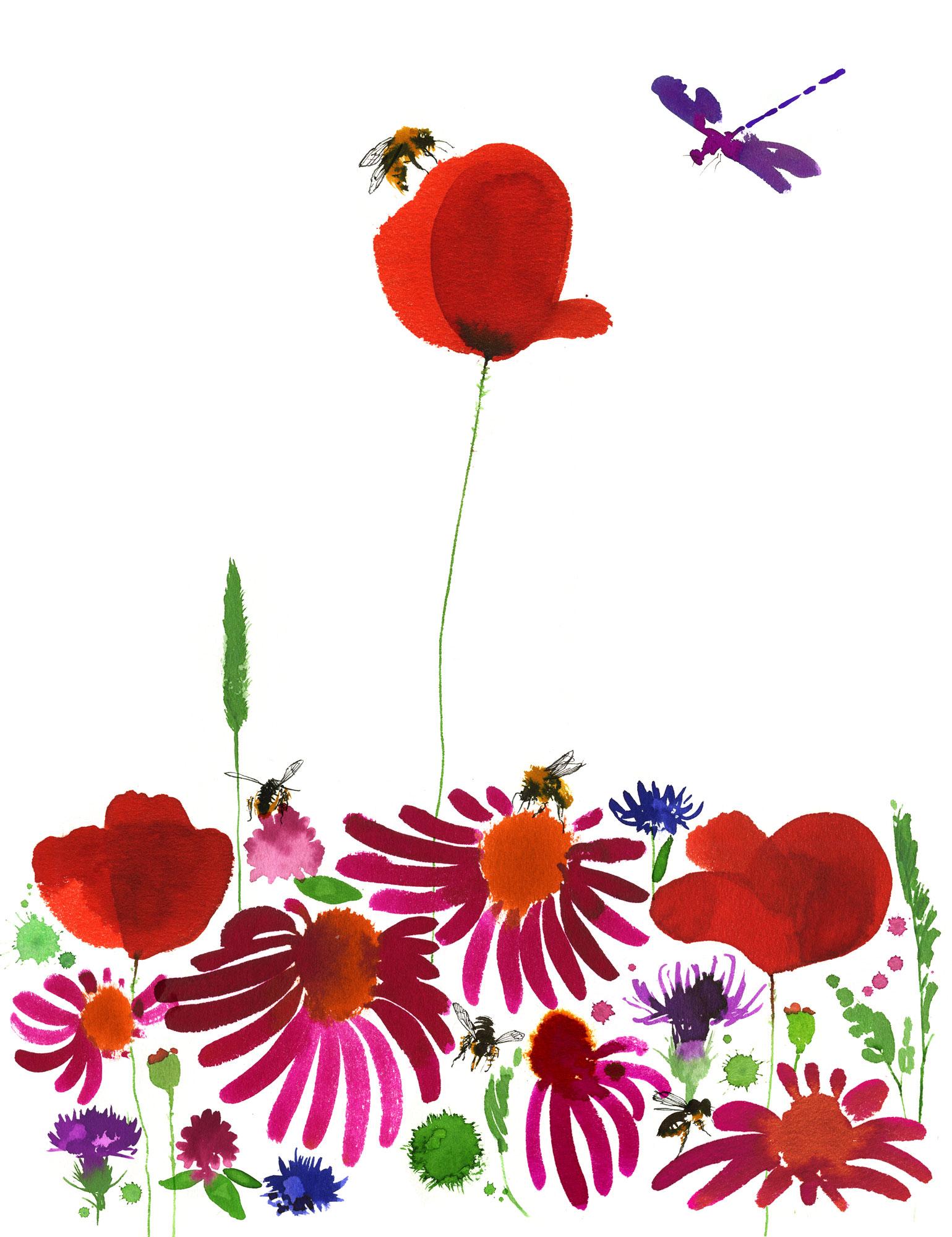 Lovisa-Burfitt-illustration Champs-de-fleurs
