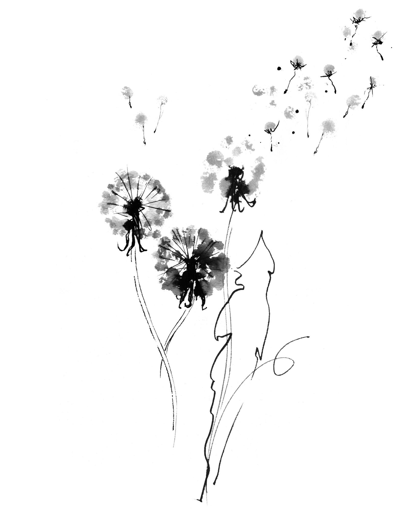 Lovisa-Burfitt-illustration-Dandelions-wiltering